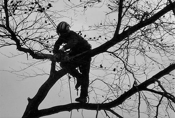 tree-rangers-portfolio